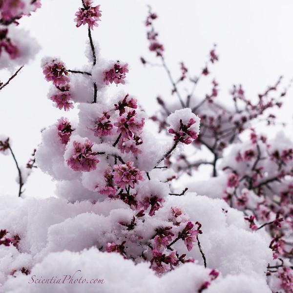 Spring Shock