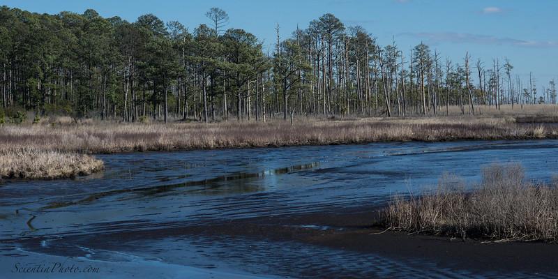 Wetlands at Low Tide - 2