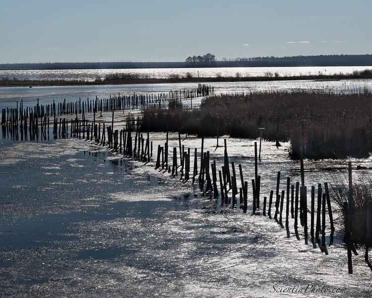 Wetlands at Low Tide - 3