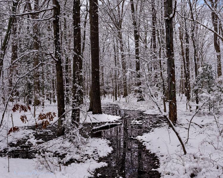 Spring Snow Near St. Michaels