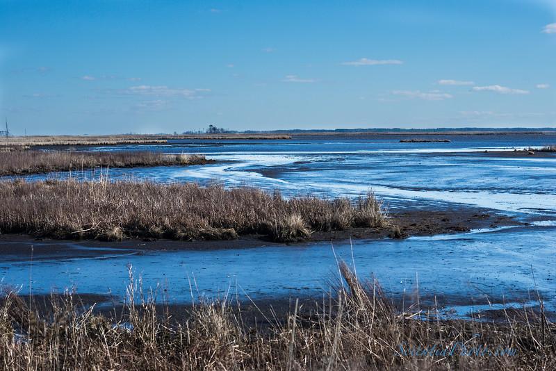 Wetlands at Low Tide - 1