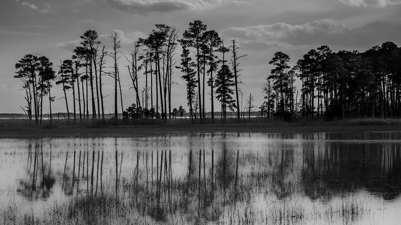 Blackwater National Wildlife Preserve II