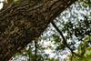 #5 Abandoned Cicada Shells from an Upward March