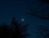 #9 Venus & the Pleiades