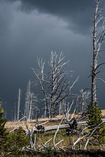 18 Standing Deadwood II ( Yellowstone )
