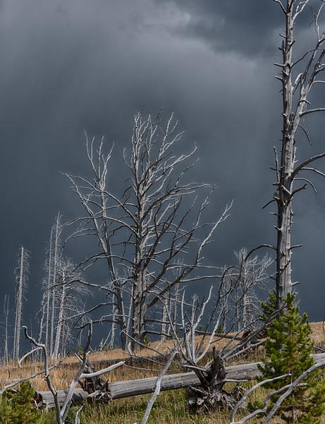 03 Standing Deadwood I ( Yellowstone )