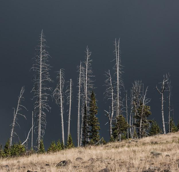 19 Standing Deadwood III ( Yellowstone )