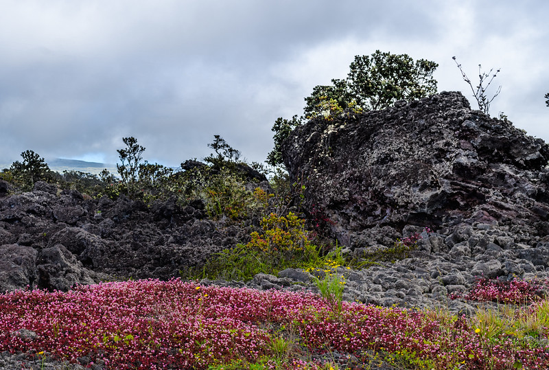 09 Lava, Lichens & Invasive Plants at 7,000'