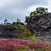 09 Lava, Lichens & Invasive Plants at 7,000'