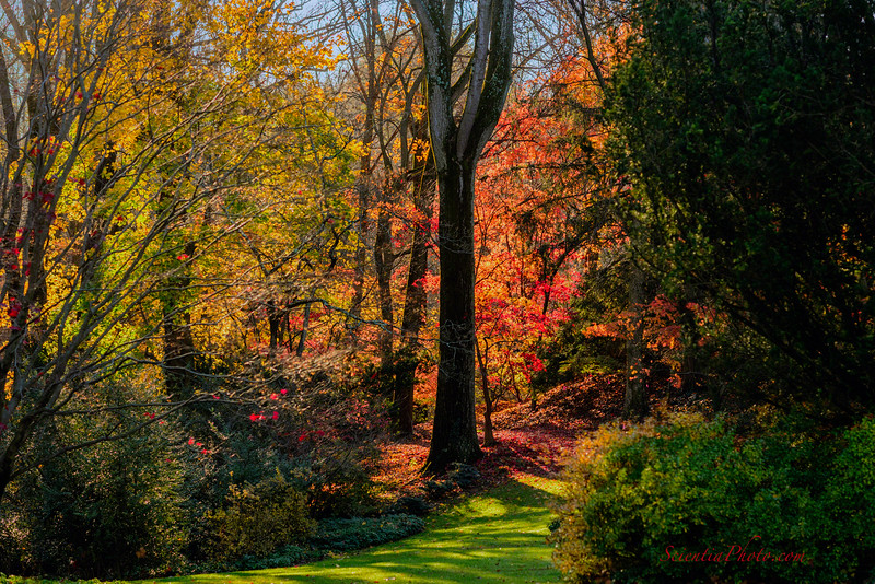 11) Late Autumn at North Wind & South Wind Roads in Ruxton, MD