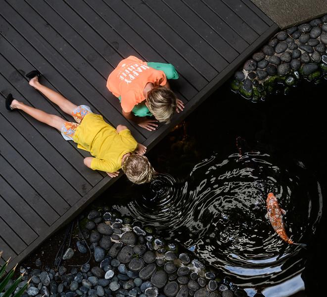 Two Boys and a Carp Pond