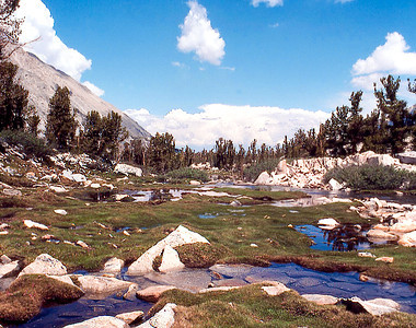 A grassy meadow made green by the last melting snows: Minarets WIlderness. (August 1980)