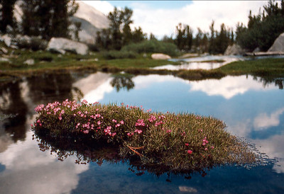 A snow-melt pond in a meadow of the high passes, Minarets Wilderness, Sierra Nevada. (August 1980)