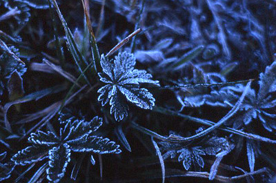 A hard frost coats grass and ground cover in the John Muir Wilderness of the Sierra Nevada, east-central California, May 1971.