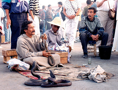 My favorite snake charmer performed daily in the heart of the Djemaa al Fna square. When I first photographed him, he was messing with a trio of Black Cobras (one of which he is holding in this photo). I was told later that the snakes were kept in boxes lined with ice cubes to keep them cool and docile; they were only removed from their boxes for short periods to display to the crowd that inevitably gathered around this fellow.