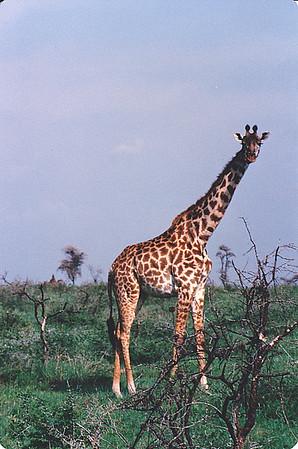Tanzania & Kenya 1988