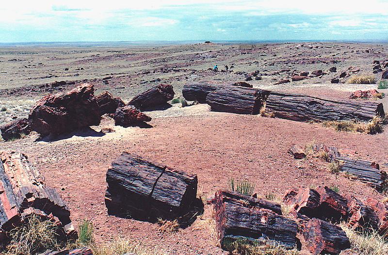 Petrified Forest National Park, near Holbrook in northeastern Arizona.