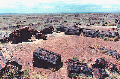 Petrified Forest National Park, near Holbrook in northeastern Arizona.
