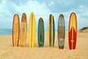Long Boards 4 12x18