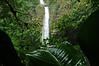 La Fortuna Falls & Leaf 4 DSCF1398 Horz_dfine
