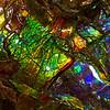 ammolite, ammonite (Alberta, Canada). Gem & Mineral Show, Tucson, Arizona USA