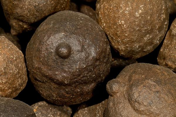 Moqui marbles (Utah, USA). Gem & Mineral Show, Tucson, Arizona USA