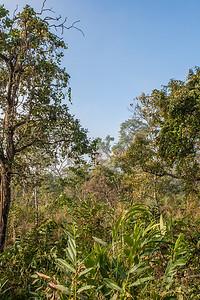 Kaziranga National Park, Tezpur, Assam India