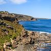 New Zealand fur seal, Arctocephalus forsteri (Otariidae). Flinders Chase National Park, Kangaroo Island Australia
