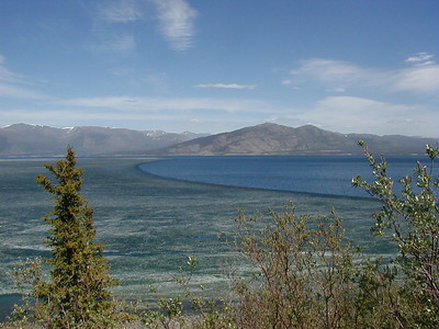 June 8, 2002:  The last of the ice on Kluane Lake in the Yukon is being pushed northward by a warm south wind as the lake's surface finally recognizes the advent of spring.