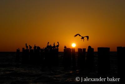 Pelicans Roost, Old Pier Pilings, Naples, FL