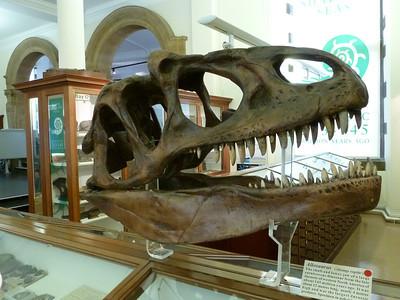 Natural History Museum, Cambridge