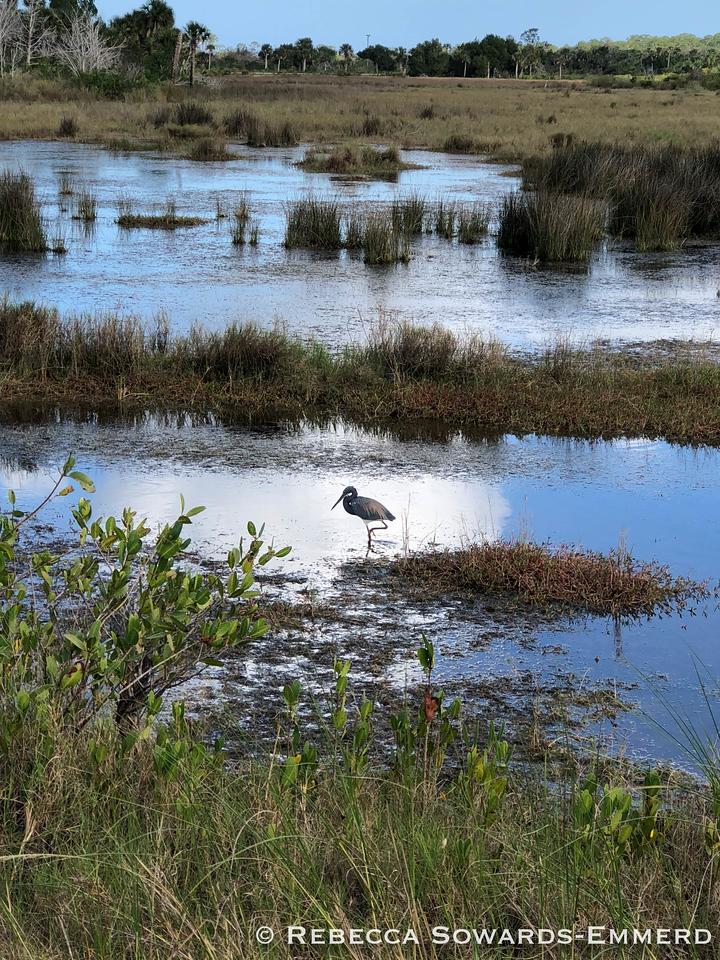 Wildlife Drive at Merritt Island National Wildlife Refuge
