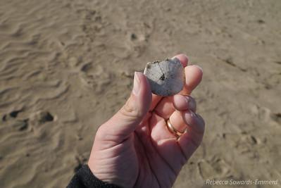 Sand dollars at Morro Rock.