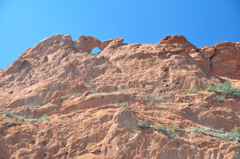 Kissing camels from below