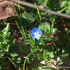 I found a wildflower. Yay!