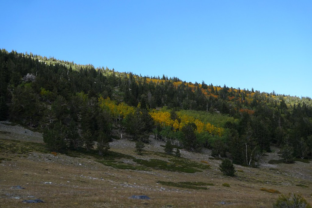 Aspen patches
