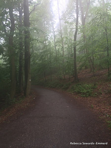 I turn off the Philosopher's Way up a path into the foggy forest.