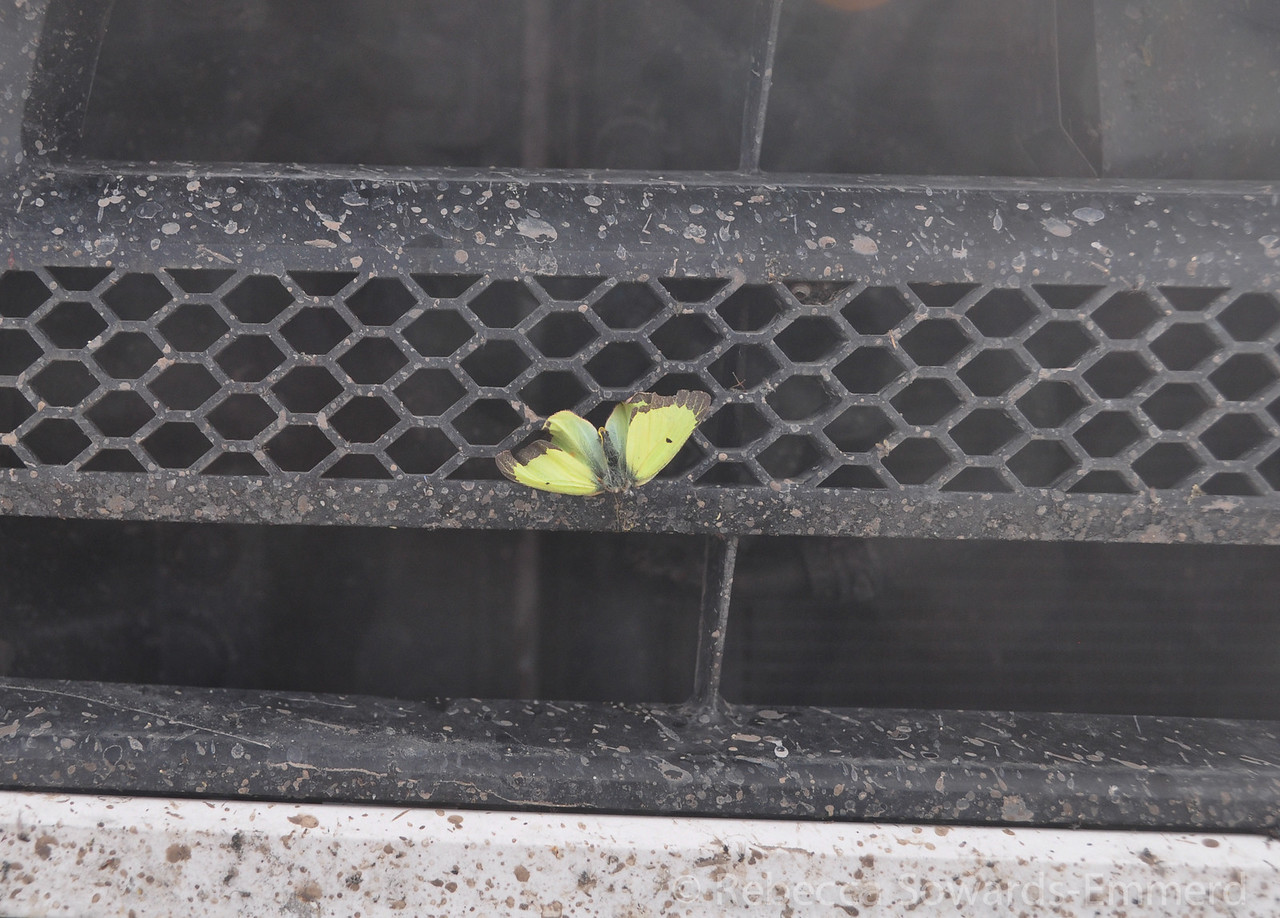 Poor butterfly.