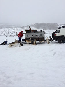 Next up we get to go dogsledding!