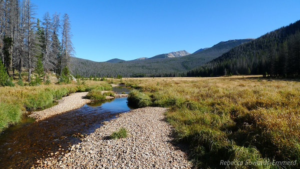 A nice meadow - reminded me a bit of Lyell canyon in Yosemite.