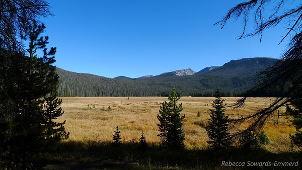 After a mile and a half we got to Big Meadow. No moose. Booo.