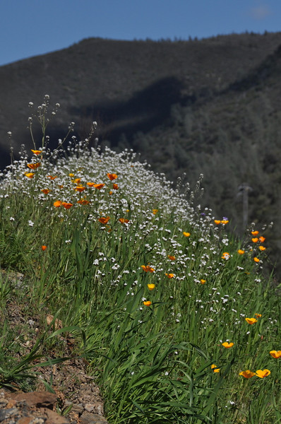Flowers in merced canyon