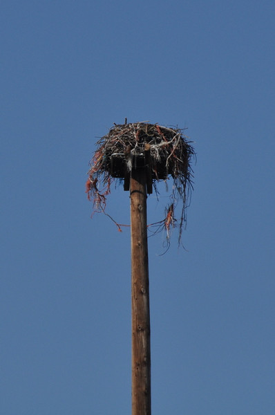 Osprey Nest<br /> <br /> When I stopped the two birds were sitting in the nest. By the time I had my tripod set up they had taken off to hunt. Sigh.