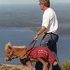"""power pc--6/2--Dan Shaw, blind from a hereditary affliction and 'Cuddles' take the 'round-the-top path at Cadillac Mt. in Bar Harbor on Friday afternoon. Cuddles is Dan's eyes. The Miniature Horse has been trained the way seeing eye dogs are.""""Cuddles, this (walk) is the supreme test of  my faith in you"""" Dan says as he walks and she gets the view.<br /> <br /> york photo"""