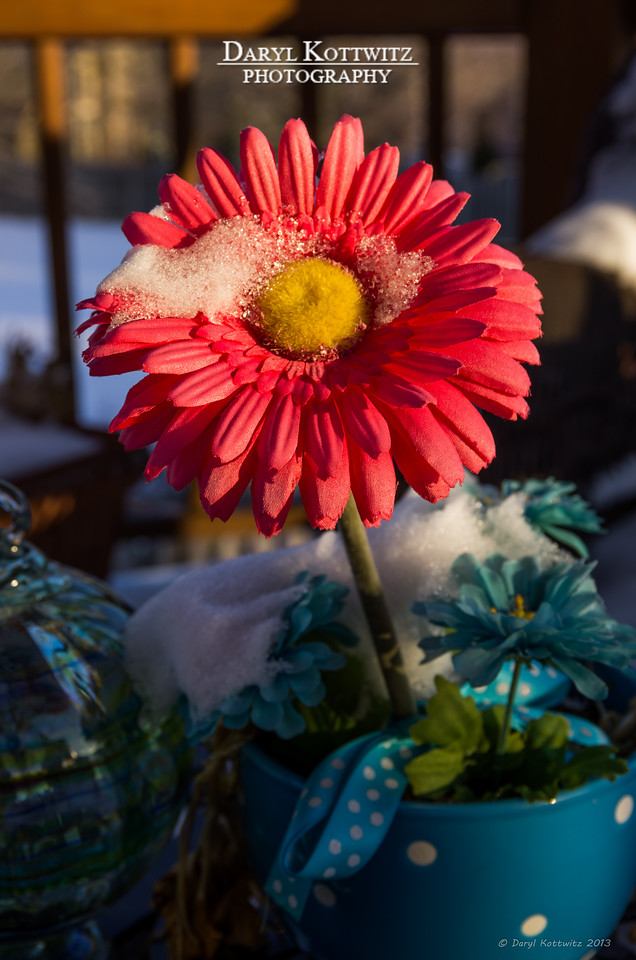 With the start of daylight savings time there was some sun left this evening.  Went exploring our snowy back yard in search of things to shoot.  Even though it's a fake flower, I consider it (and the daylight after work) a sign of Spring just around the corner.