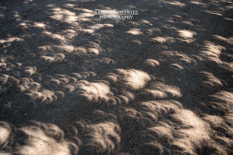 Crescent Shadows