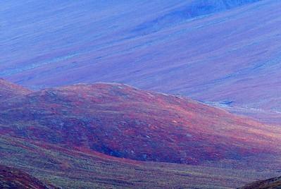 Tundra color