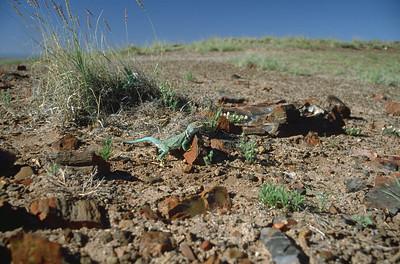 Petrified wood with lizard