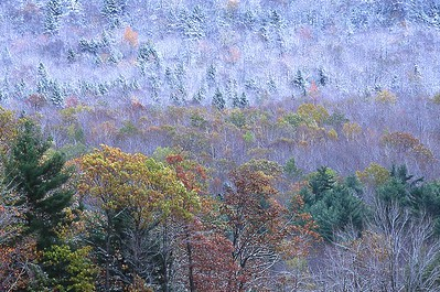 Early snowfall, Green Mountains, Vermont 321-4