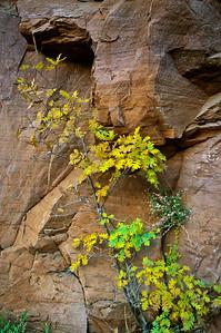 East Rim Trail, Zion National Park
